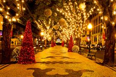 Christmas in Funchal, Madeira by JayGriffin