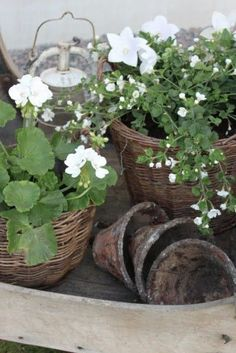 I love pots and dirt and vines and anything that looks like it's lived in a garden forever!