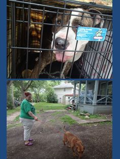 July 3, 2014:  More Spay and Neuter Success