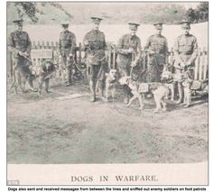 Dogs / Airedale Terrier also acted as sentinels and carried messages from the first line of fighting troops to commanding officers in the rear. The sentinel dogs were trained to stand quietly on the top of the trench alongside their master's gun barrel, and to let the soldiers know quietly if anyone attempted to approach the barbed wire entanglement without even giving a hint to the enemy that his approach has been discovered. circa 1917