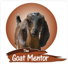 How to Get Great Tasting Goat Milk