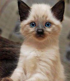 #cuteanimalspng #cuteanimalsdog #animals #cute