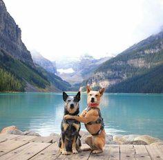 BEST BUDS~The West Coast Heeler Pack Dogs