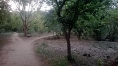 a refreshing jog in Sanjay Van last evening....hoping to be a regular to this place! :)