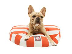 Buy or DIY? Fun Pet Products for Your Furry Friends >> http://blog.hgtv.com/design/2015/08/13/cute-dog-and-cat-gear-to-buy-and-diy/?soc=pinterest