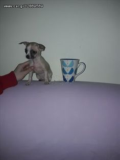 Tsiouaoua toy - € 300 EUR - Car.gr Dog Accessories, Mugs, Toy, Tumblers, Clearance Toys, Mug, Toys, Cups, Dog Supplies