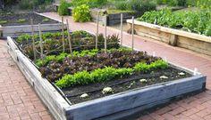 gardening australia veg patch