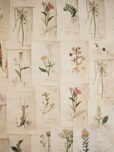 botanical prints - photo from This Ivy House - I've seen a group very much like this used as wall art