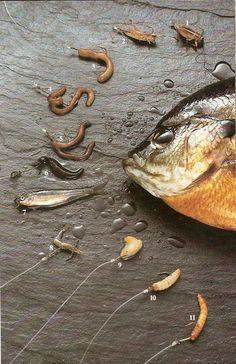 Fishing tips | Fox Lake Fishing
