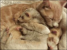 Again: CATS. LOVE. THEM. | 19 Reasons Ferrets Make The Most Adorable Pets