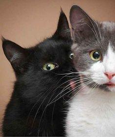 The Surprise Kiss