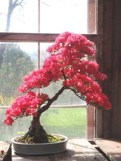 ●♣How do you like this cute tree?♣♣       #BonsaiInspiration
