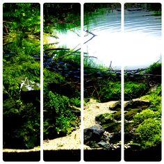 Aquascape <3