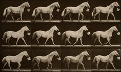 "Eadweard J. Muybridge, ""Walking with a bucket in mouth; light-gray horse, Eagle"" (1884-1887), collotype print"