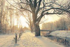 i love winter.  the way snow sticks to everything.  =)