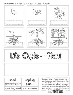 Students can use these free life cycle of a plant worksheets to learn all about the stages of a plant. These free printable worksheets, coloring pages, cut & paste activities are perfect for hands-on science learning centers. Science Clipart, Science Worksheets, Science Lessons, Sequencing Activities, Science Activities, Life Science, Plant Life Cycle Worksheet, Montessori, Plant Lessons