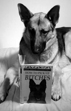 I love German Shepherds so I had to repost this. ~~and the cuss word is obviously in correct context ;)