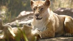 Sarabi by GiuseppeDiRosso on DeviantArt Lion King Story, Simba Lion, Lion King Movie, Lion King Simba, Disney Lion King, Disney Live Action Films, Disney Pixar Movies, Lion Africa, Lion King Pictures