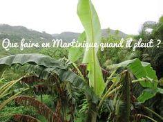 Parce que l'île possède un climat tropical, parfois il pleut en Martinique. Je vous propose donc quelques activités pour ne pas vous ennuyer pendant votre séjour. France, Blog Voyage, West Indies, Photos Du, Cactus Plants, Travel Tips, Plant Leaves, Escapade, Nature