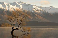 Early Mountain Light - Wanaka, Otago, New Zealand by John Phillips https://plus.google.com/108875071324060158789/posts/aqRNLL6aXyP