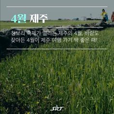 ddgSO Travel Tours, Travel Information, Korean, Poster, Life, Beautiful, Korean Language, Billboard