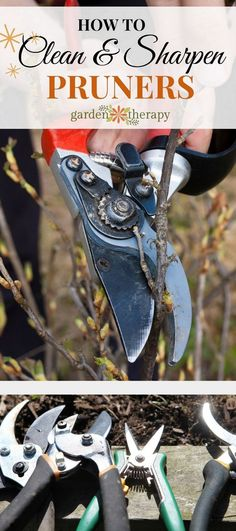 How to care for pruners - It is easy to neglect caring for pruners, but with proper sharpening and regular cleaning, they will last longer and perform much better. It's not hard! Follow these simple steps to keep your pruners in tip-top shape, so you can use them to keep your plants in tip-top shape.