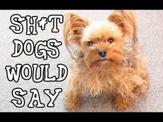 Stuff Dogs Say- One of my favorite S*** Girls Say parodies. This video started my love affair with Dexter's Ruff Life :)