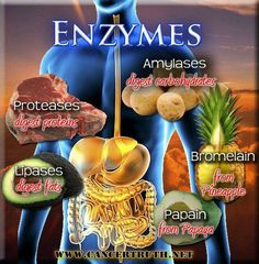 Eat foods with enzymes for digestive health