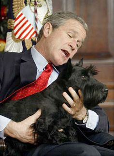 Even a president needs a man's best friend: Adorable new book chronicles the pets of America's leaders from Obama's dog 'Bo' to FDR's terrier 'Big Boy' and Calvin Coolidge's pygmy hippo Bush Family, Laura Bush, American Presidents, Family Dogs, Westies, Beautiful Dogs, Mans Best Friend, Best Dogs, Dog Lovers