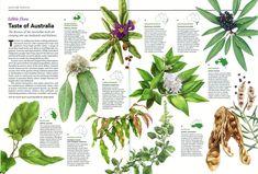 Australian Geographic Nature Watch article - Edible bushfood Garden Plants, Infographics, Flora, Watch, Nature, Clock, Naturaleza, Info Graphics, Infographic