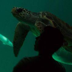 #tortugamarina #tortuga #aquarium #zooaquiariumadrid #nikon #nikonfotografie (en Zoo Aquarium de Madrid)