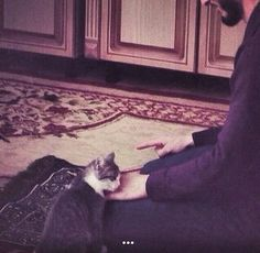 cat, cute, and muslim image Cute Baby Cats, Kittens Cutest, Couple Goals Teenagers Pictures, Muslim Images, Cute Muslim Couples, Islamic Cartoon, Anime Muslim, Islamic Wallpaper, Islamic Pictures