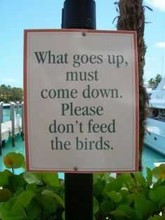 dont feed the birds lol