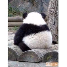 Cute panda butt
