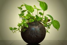 Great if you don't have a backyard or want some greenery inside: Plants That Grow Really Well in Darker Rooms.