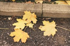 Photography by SP Kirilov: autumn leaves Lomography, Autumn Leaves, Lens, Fall Leaves, Lentils
