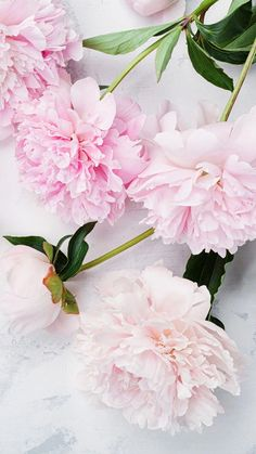 Ideas Flowers Pink Wallpaper Peonies For 2019 Peonies Wallpaper, Pink Wallpaper Backgrounds, Flower Backgrounds, Iphone Wallpaper, Floral Wallpapers, Cellphone Wallpaper, Peony Flower, Flower Art, Flower Ideas