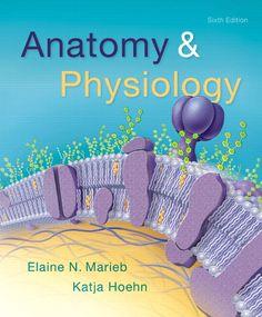 PDF Anatomy And Physiology Edition By Elaine N Marieb Katja 9780134156415 EBook ETextbook Only Digital