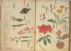 Japanese botanical: With fishes, flowers, insects.