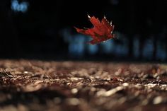 Image uploaded by sherrie. Find images and videos about photography, autumn and leaves on We Heart It - the app to get lost in what you love. Shocking Blue, October Country, Poetic Words, The Descent, Wind Of Change, World View, Heart Quotes, Her Smile, Wabi Sabi