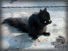 Black Squirrel Capital in Council Bluffs, Iowa