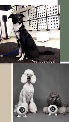 Entdecke die Kugellautsprecher aus Porzellan.  #Hundeliebe #Wienliebe #Lautsprecher #mosoundvienna #mosoundstore Kugel, Classic, Dogs, Animals, Derby, Animales, Animaux, Pet Dogs, Doggies