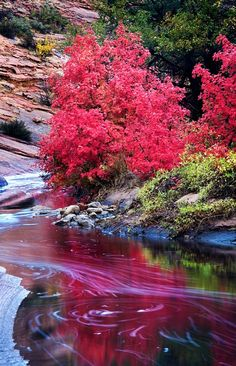 ..Upper Zion In Fall  by Peter B. Kunasz, Western United States..