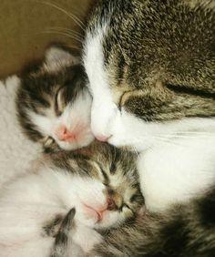 Mommas love