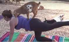 Daily Cute: Goats Join A Yoga Class | Care2 Causes