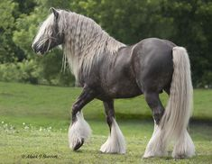 Mount Inspiration:  A sturdy but still elegant steed that might be found in harsher territories such as Barta, Vanessae, or around Ruin. (breed is a Gypsy Vanner)