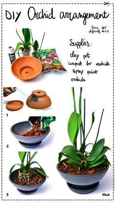 DIY Orchid Arrangement.  #diy #orchid