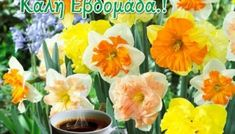 Εικόνες για καλημέρα-καλή εβδομάδα - eikones top Good Morning, Plants, Buen Dia, Bonjour, Bom Dia, Flora, Plant