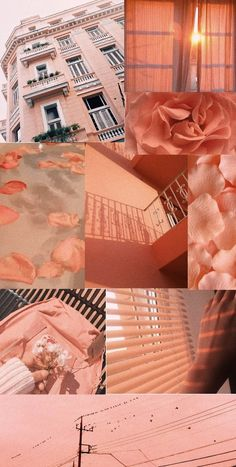 Peachy aesthetic wallpaper - New Ideas Peach Wallpaper, Tier Wallpaper, Trendy Wallpaper, Wallpaper Iphone Cute, Tumblr Wallpaper, Animal Wallpaper, Colorful Wallpaper, Cute Wallpapers, Wallpaper Backgrounds