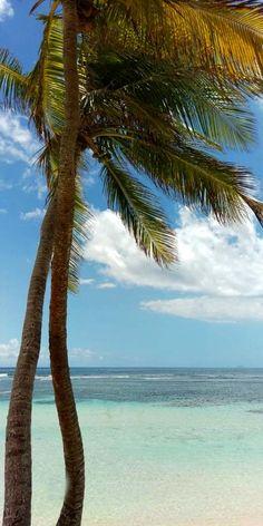 La Caravelle Beach, Sainte-Anne, Guadeloupe 🌴 -------------- #caribbean #beaches #vacation #travel #tropics